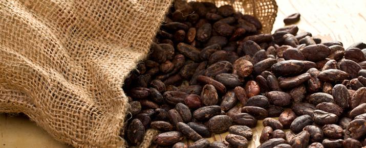 Investir dans le cacao